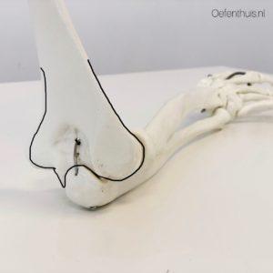 Distale deel humerus